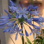 梅雨時期の花と菜園