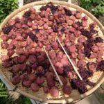 健康と夏バテに梅干作り